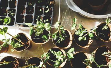 plantjes voor in de voortuin